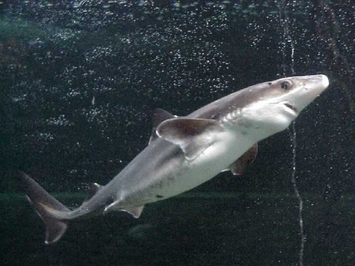 4. Then there was that day it rained baby sharks in Virginia Beach…