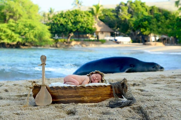 6) There's nothing better than this monk seal that photo bombed a newborn session.