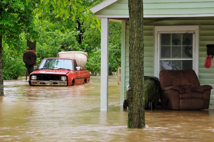 9) They can get through a flood