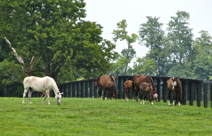 13. Visit the Kentucky Horse Park or farms.