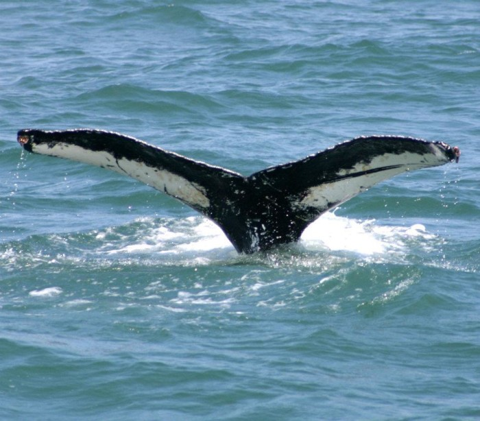 17. Go whale watching this winter.