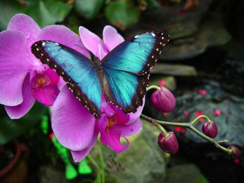 8. Visit the Magic Wings Butterfly Conservatory.