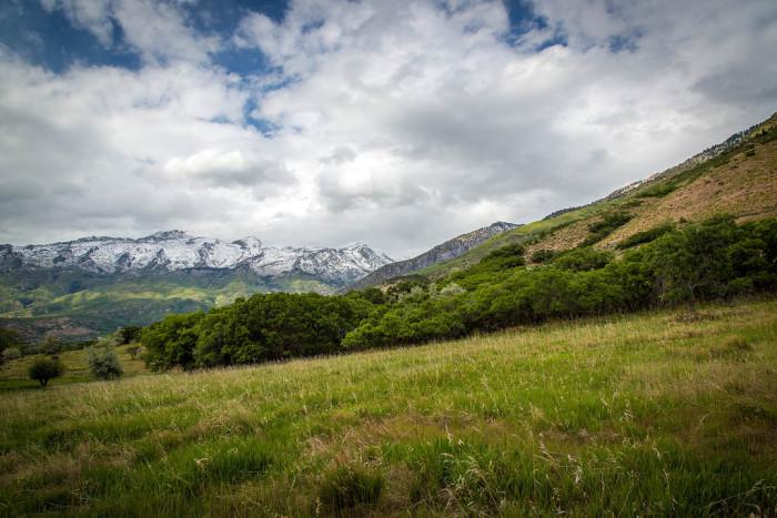 1. Alpine