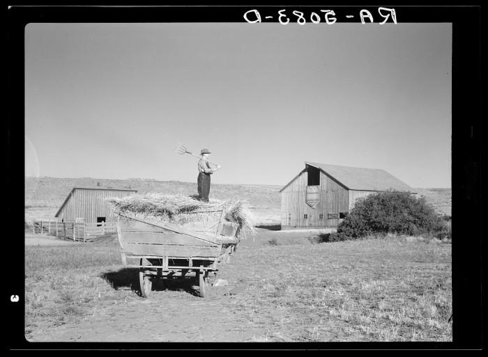 15. Working on the farm near Bickleton in 1936.