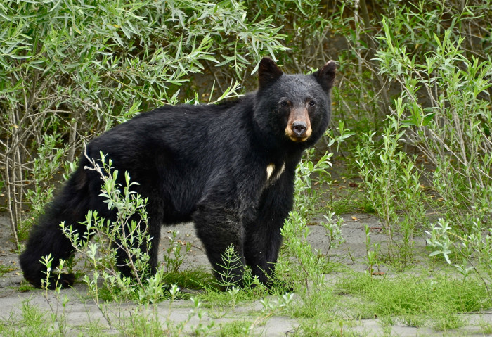 15. Are there bears in South Carolina?