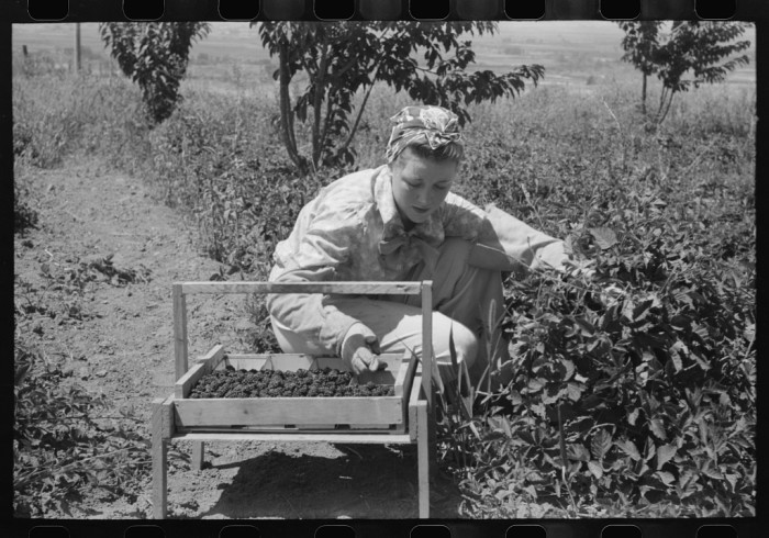 4. Cache County, July 1940