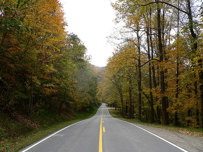 13. Gorgeous country roads to drive down.