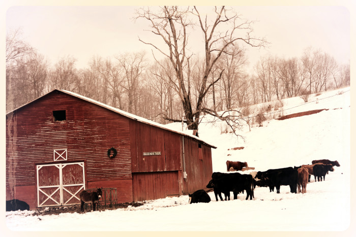 10. Briar Patch Farm in Woolwine looks like a vintage postcard in this lovely winter scene.