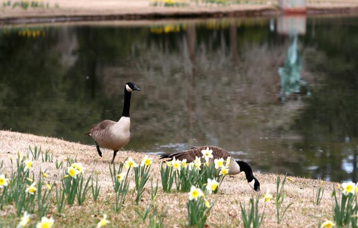 brookgreen-gardens-murrells-inlet-3