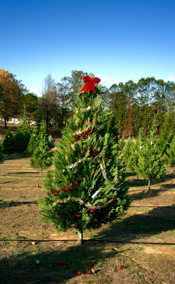 8. The Christmas tree smell