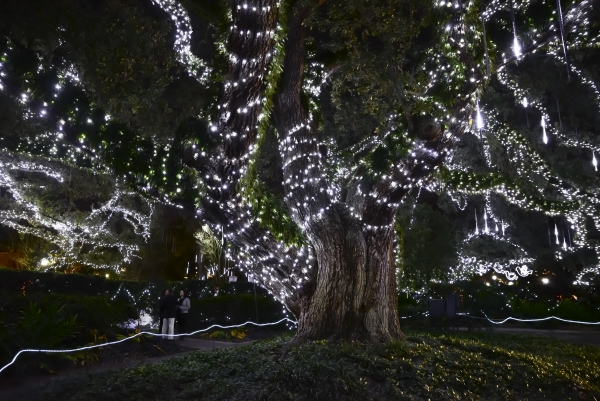 7. Christmas in the Oaks, New Orleans, LA