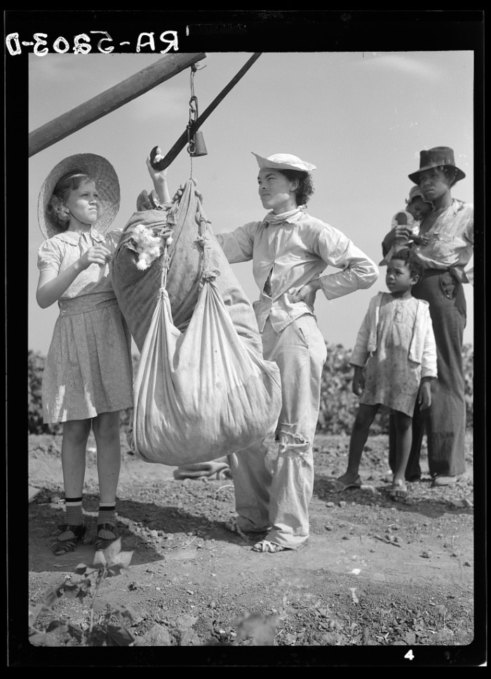 9. Cotton pickers were hard at work in Kaufman, TX in 1936. They earned 50 cents for every hundred pounds.