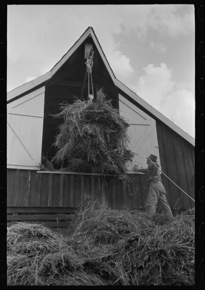 8. Elevating Hay