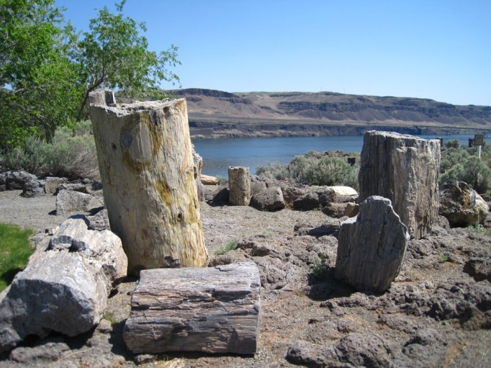 8. Ginkgo Petrified Forest State Park, Vantage
