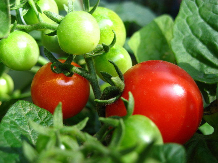 12. Good soil for growing your own veggies.