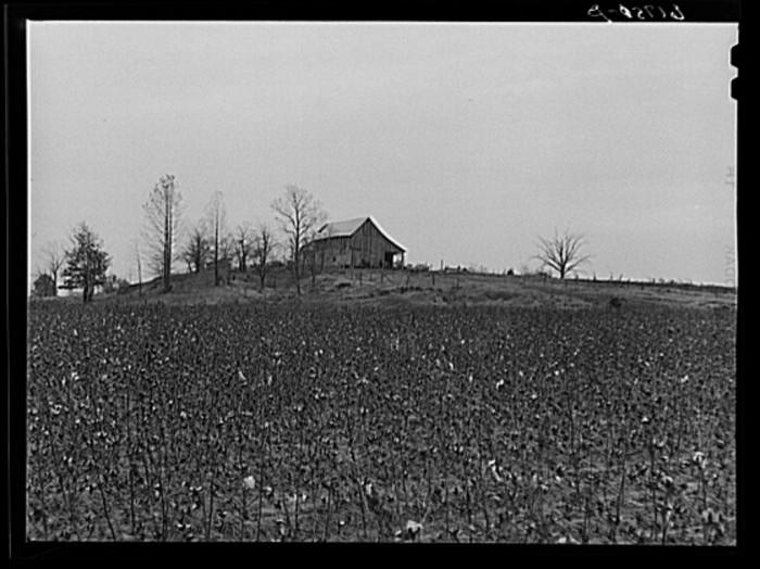 9. Greene County Cotton