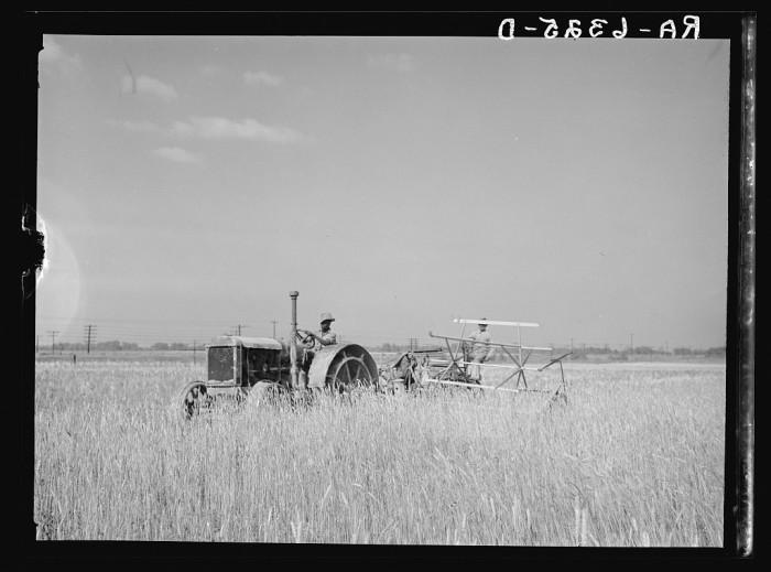 12. Harvesting Fall Wheat