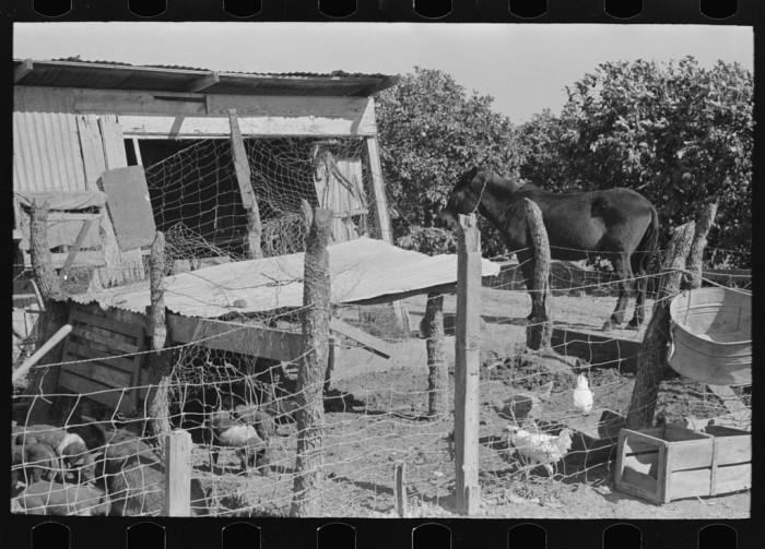 8. No big factories were necessary to raise chickens. (Hidalgo)