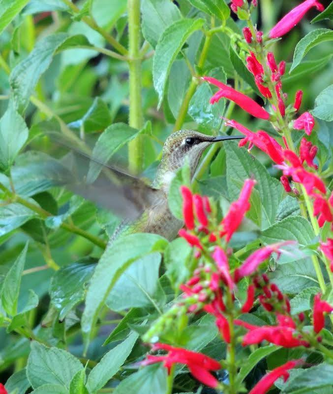 7. Hummingbirds by Jerry Segraves