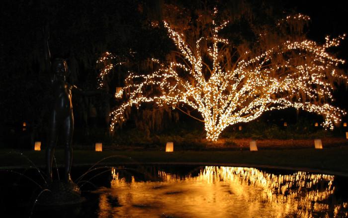 Christmas Lights In South Carolina