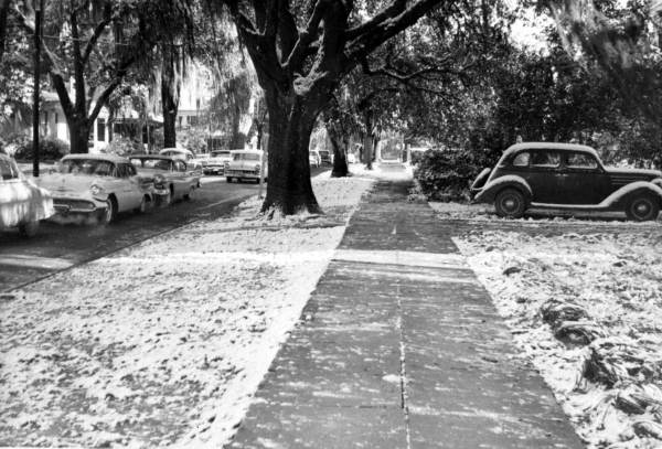 Snow on the ground in Tallahassee