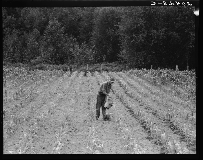 3. Here was a farm worker in 1939 northeast of Elma, providing hand irrigation.