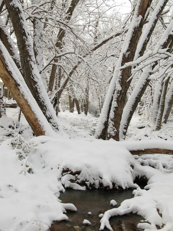 12. This creek in Tulsa is surrounded by heavy snow.