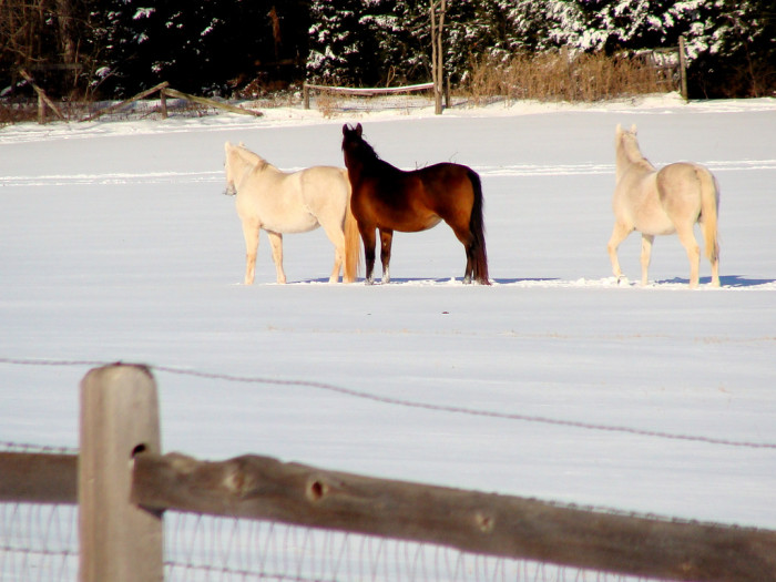 10. Horses in Edmond on a post-blizzard morning.