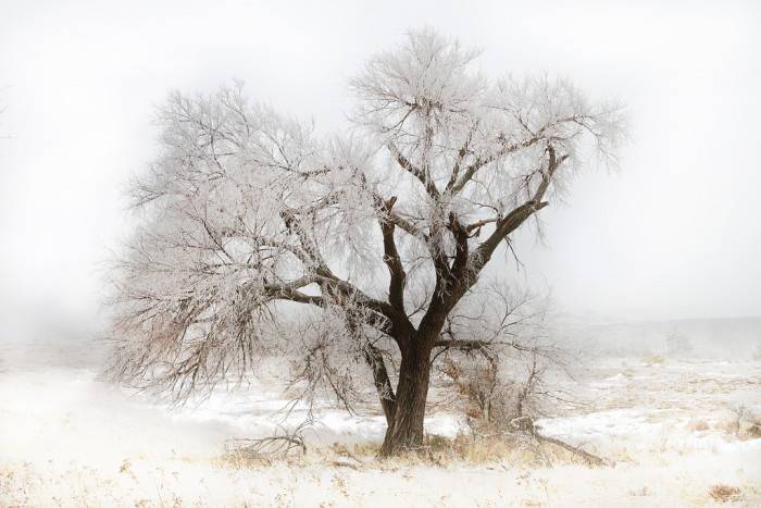 2. A cold and lonely tree in the Wichita Mountains Wildlife Refuge.