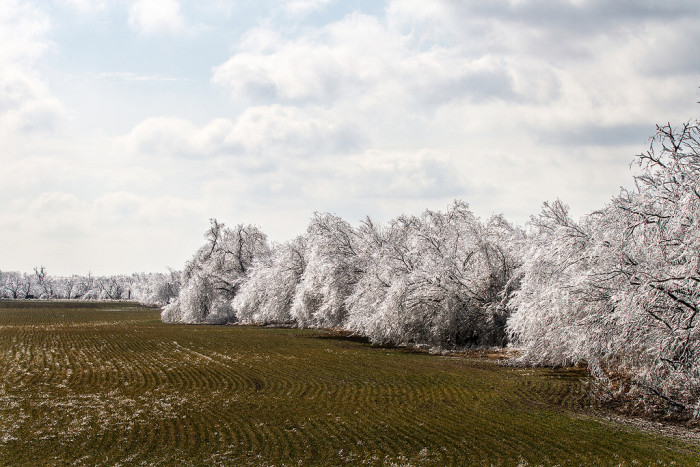 4. These iced over trees in southwest Oklahoma look chilling.