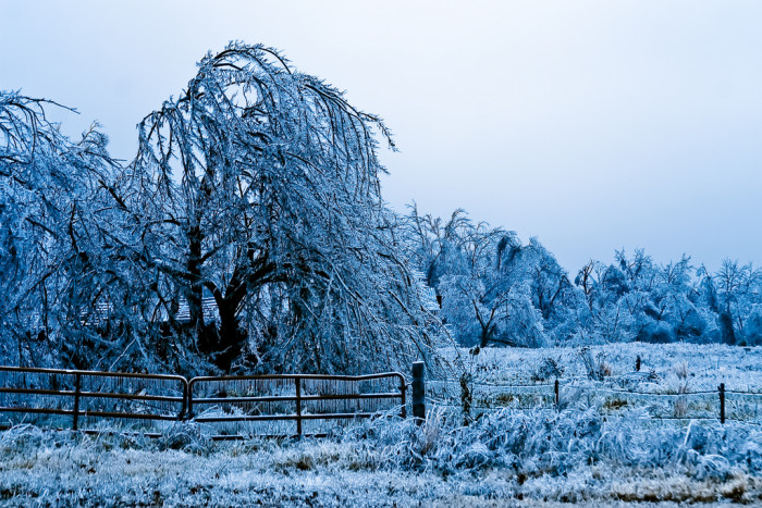 13. An icy field in northeastern Oklahoma during the ice storm of 2007.