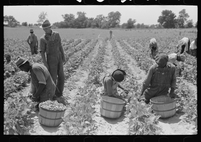 "8. ""Picking string beans in field near Muskogee, Oklahoma."""
