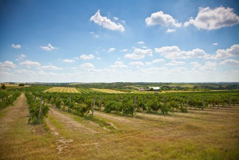 9. Take a tour of an Oklahoma winery.