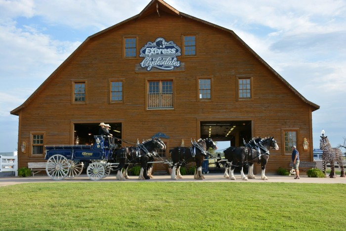 16. Visit the world famous Express Clydesdales and take a tour of the barn.
