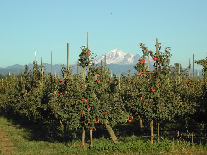 5. The lovely red & green scenery in our local orchards.