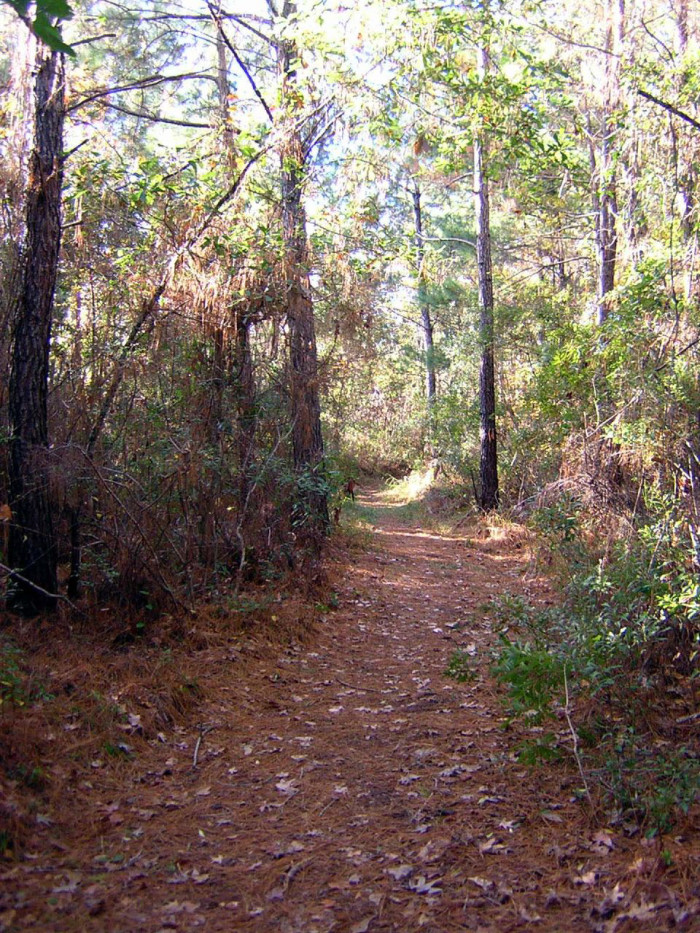 14. Take a hike on a passage of the Palmetto Trail.