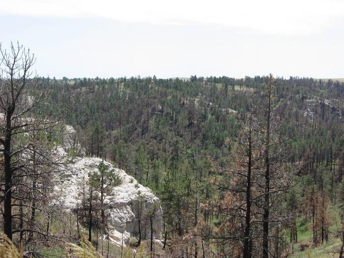 6. Pine Ridge Region