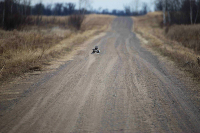 18. Prairie's Edge Wildlife Drive is the perfect way to enjoy the amazing MN scenery on a cold day. You don't even have to get out of the car, but the lookout points sure are stunning! You might even find an eagle or two!