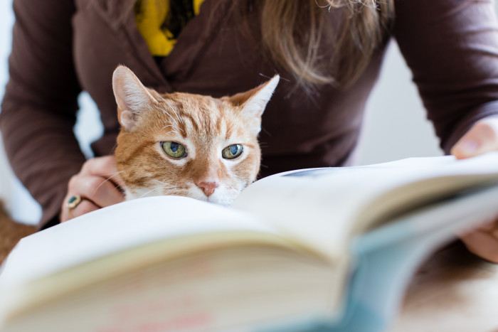 8. By curling up with a good book (and maybe your cat?)