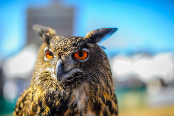 13. Get wild at the Southeastern Wildlife Expo in Charleston in February.