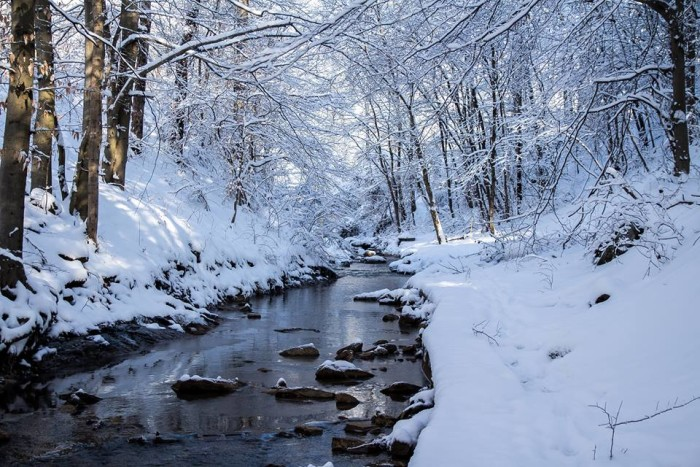 7. This snowy creek on Charleston's West Side
