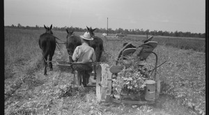 There's Something Special About These 12 Arkansas Farms From The Past
