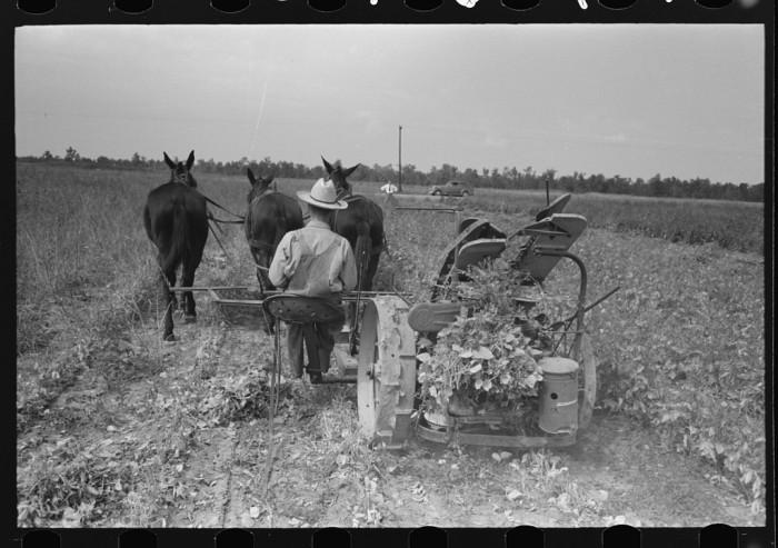 4. Soybean Field