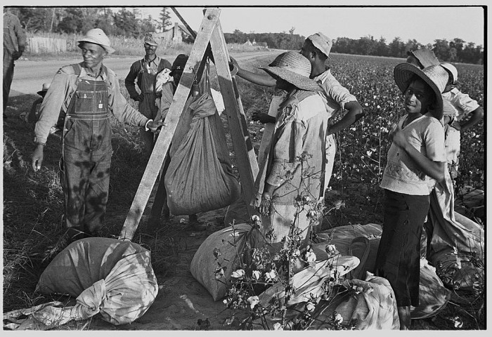 8. Weighing in Cotton