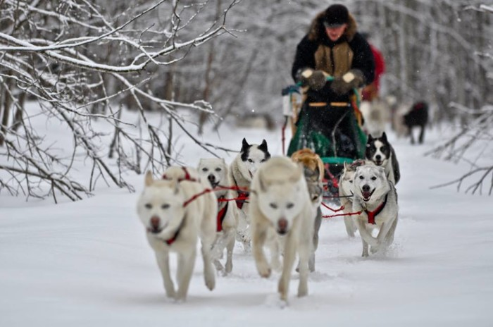 1. Wolfsong Adventures in Mushing