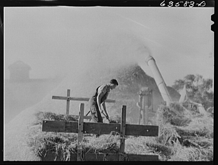 13. This man is operating a threshing rye in Portage in 1941.