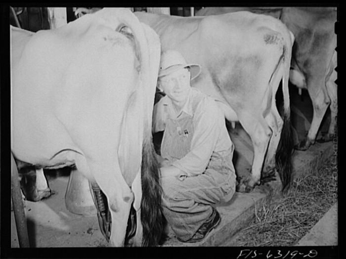 2. This guy is up waking the cows in Vernon County 1942.