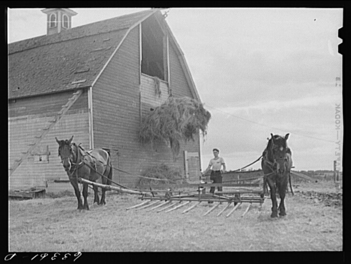 4. These gentlemen are in the process of loading up the hay in 1941 in Douglas.