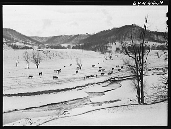 6. Snow fell on this La Crosse dairy farm in 1942.
