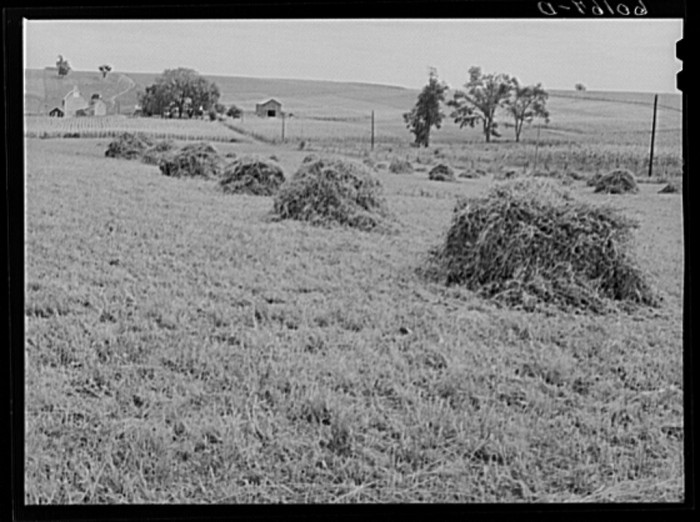8. This is a shot of alfalfa hay in 1939 in Crawford County.